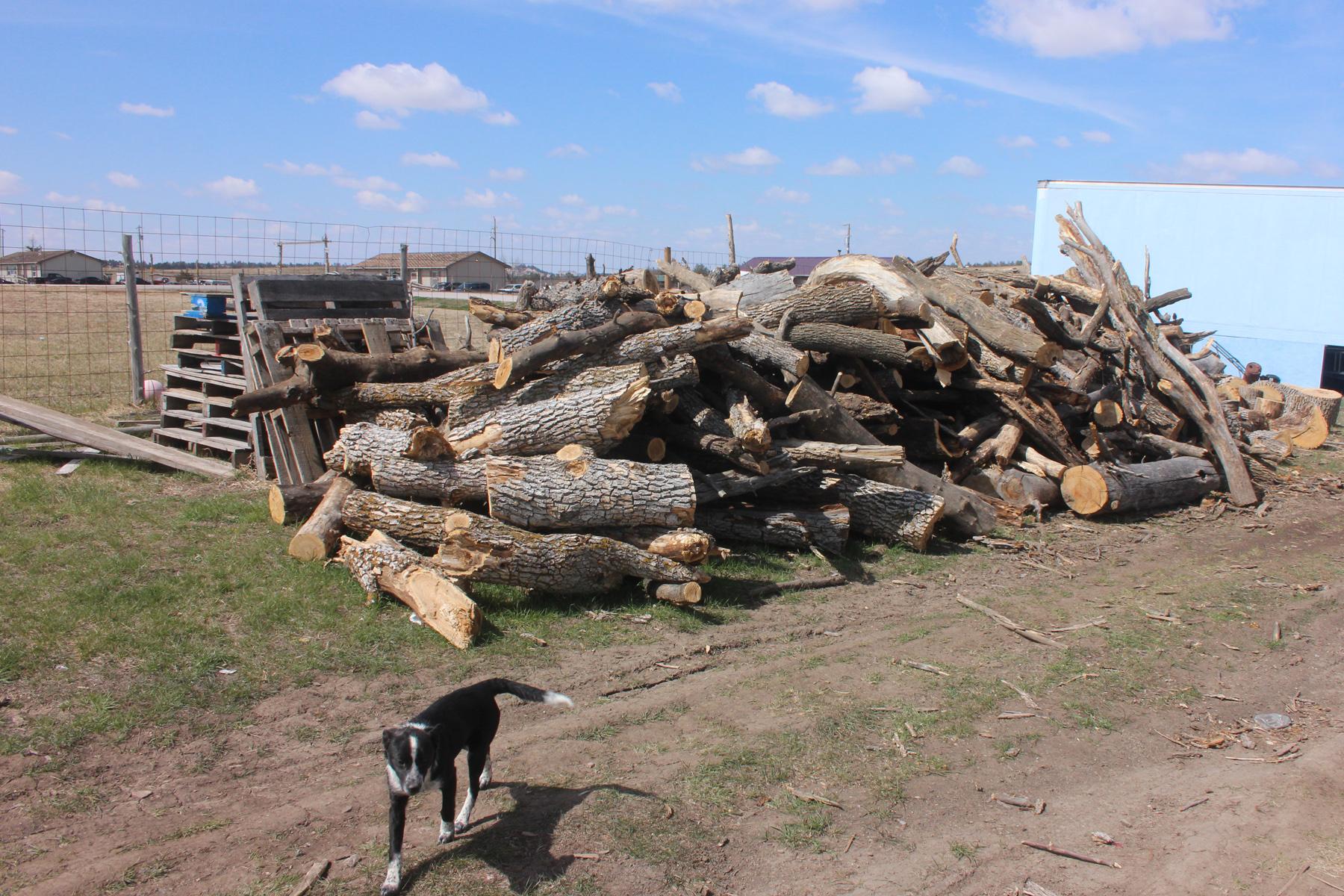 Wood before splitting